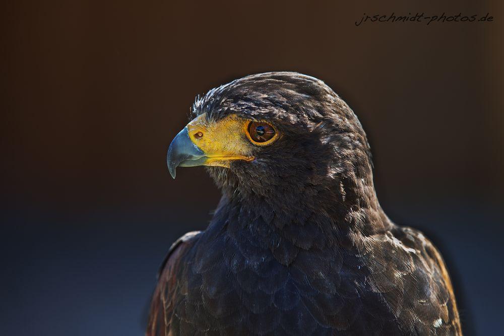 Bird #002