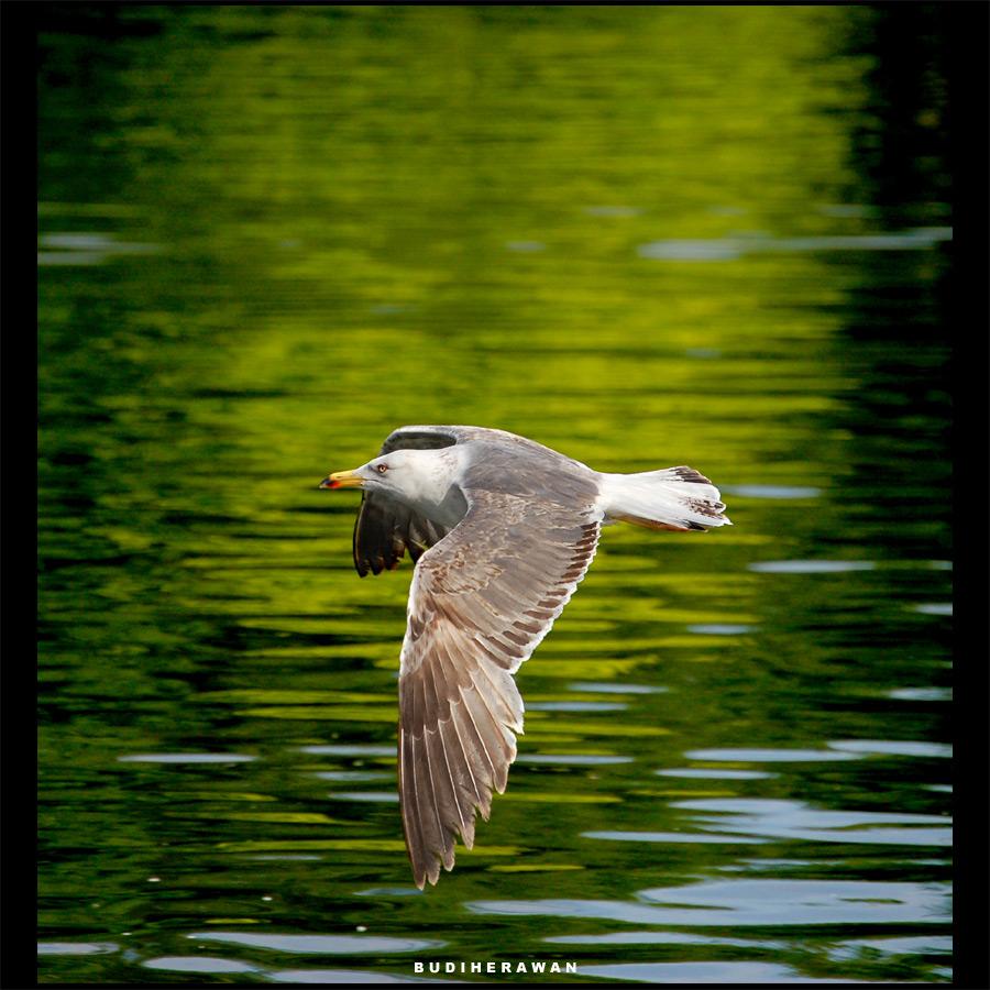 [ bird 01 ]
