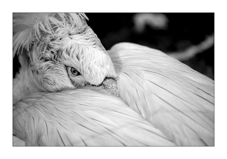 ...bird...