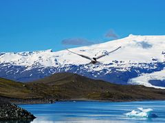 Bird Crash Island