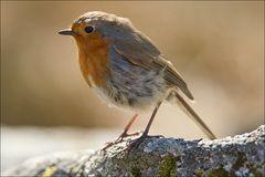Bird in Scottland