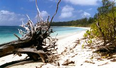 Bird Isl. Seychelles