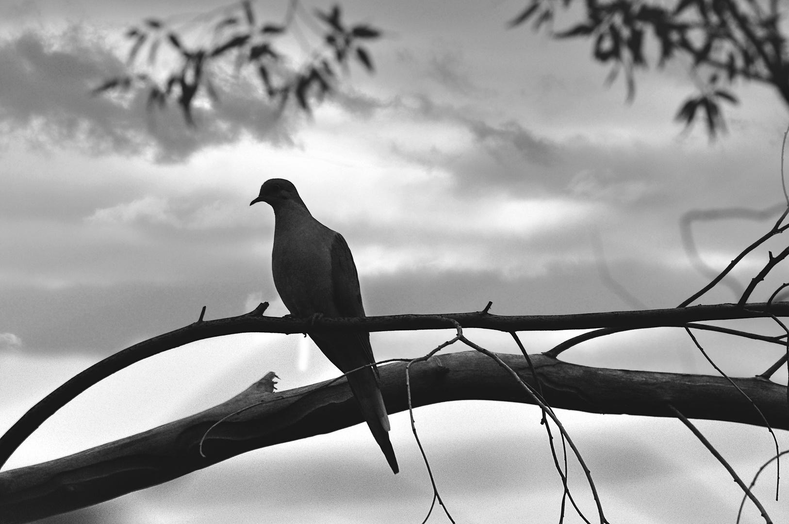 Bird on a Limb