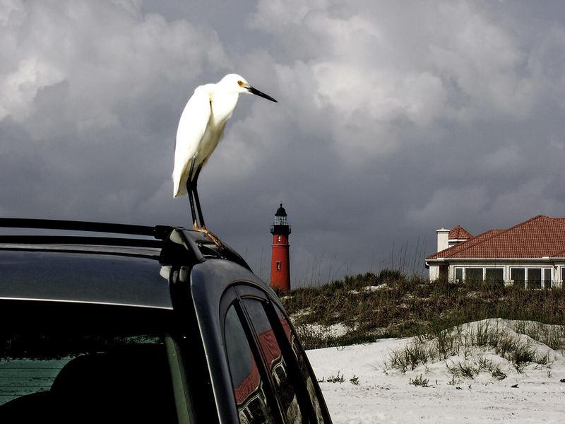 Bird on Car