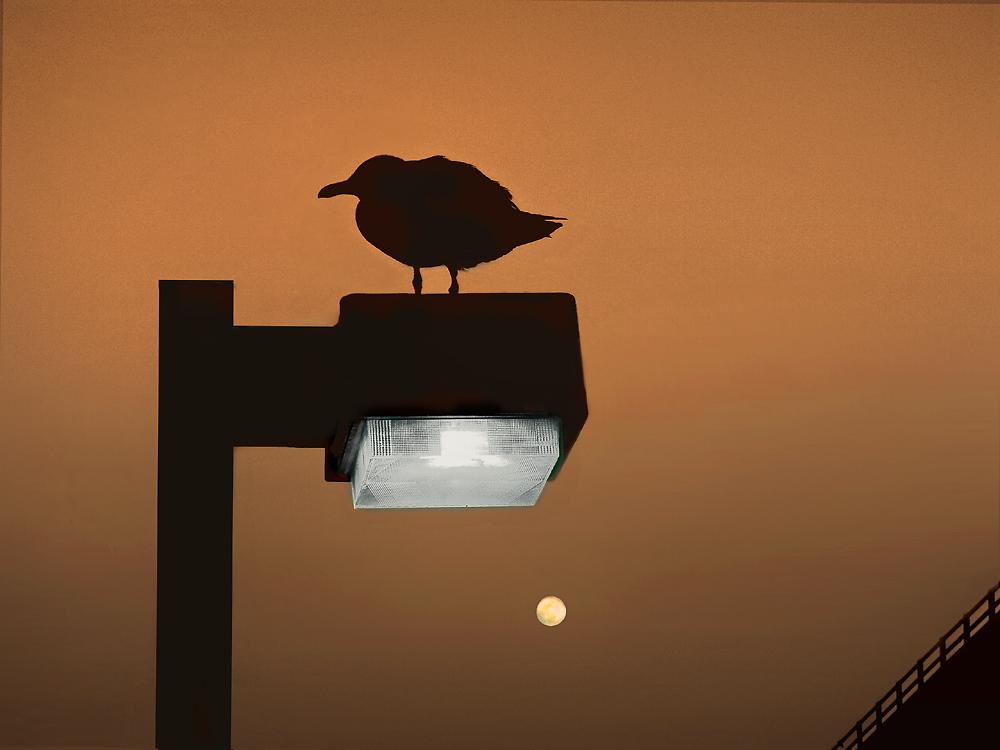 Bird on Lamp Post