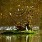 Bird Paradise*