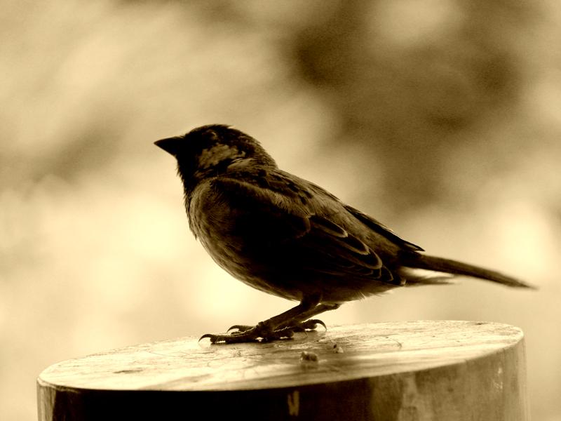 Bird Porttrait