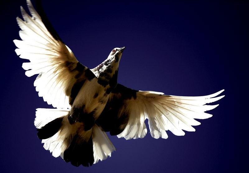 bird (questa me la potevo risparmiare!)