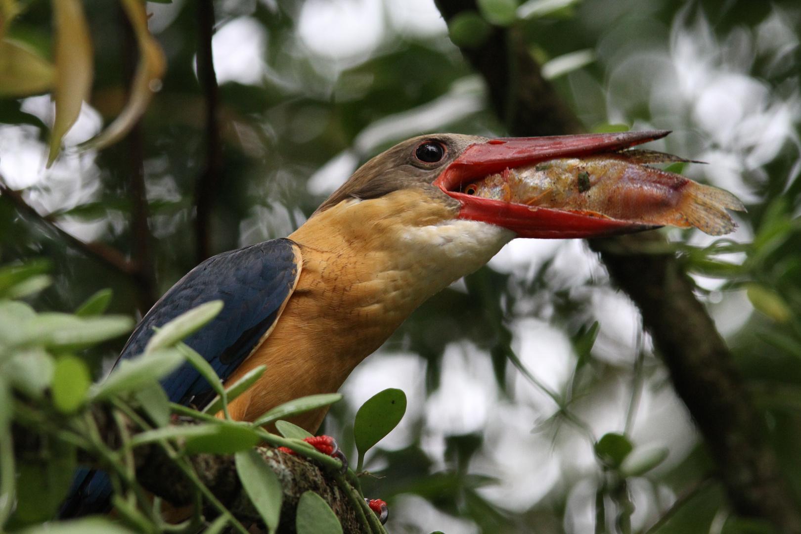 Bird with prey