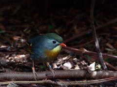 Birdie - klein, aber oho.