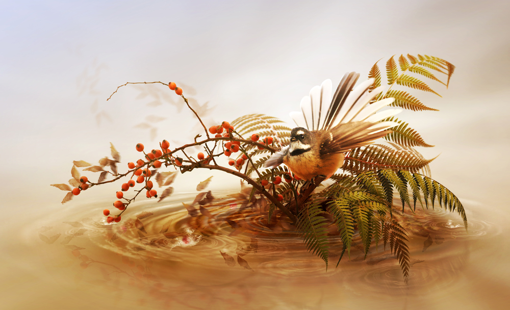 birdie's island