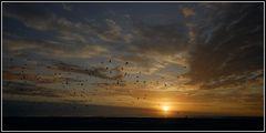 birds across the sky ...