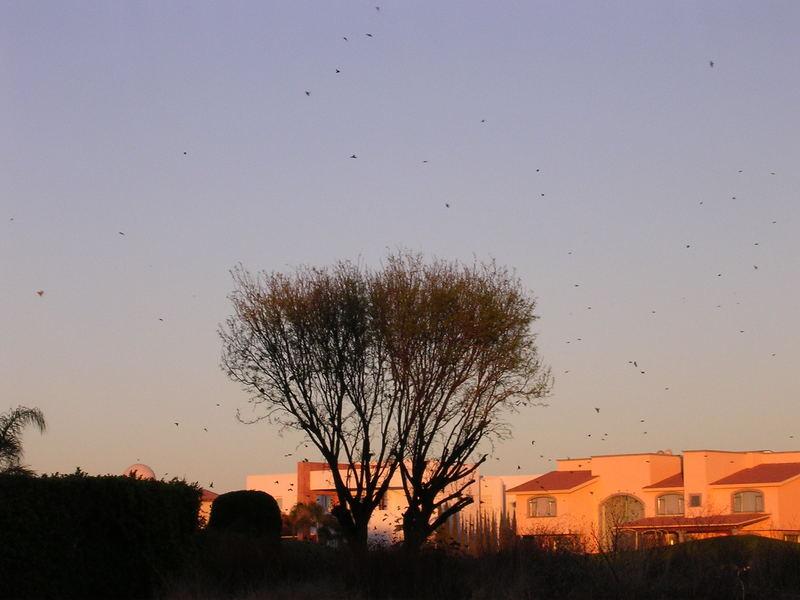 Birds in a daybreak