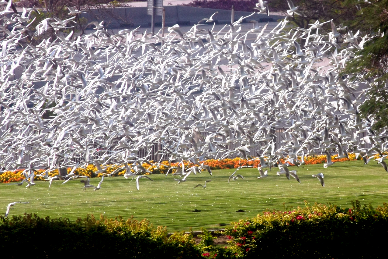 Birds in the Business Village/Dubai