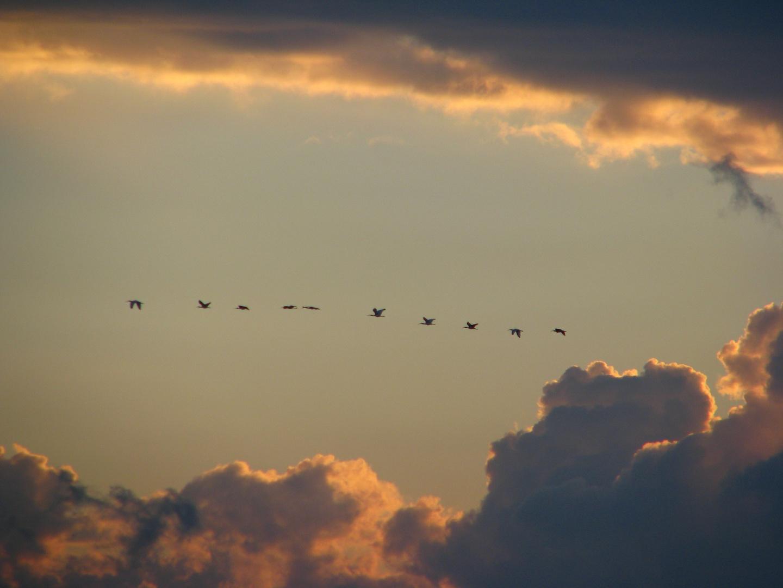birds in the sky - mexico sunrise