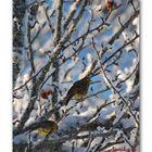 Birds in the winter tree