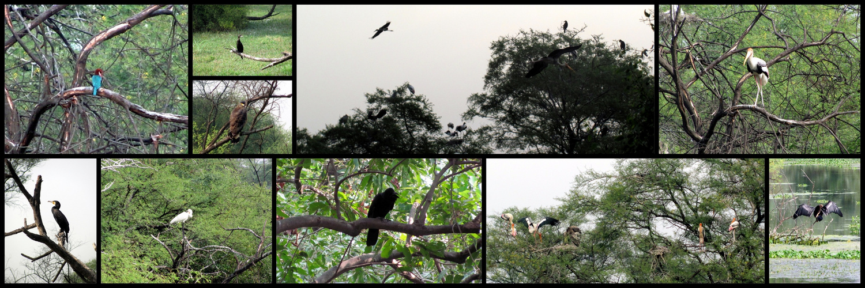 Birds of Keoladeo Bird Sanctuary