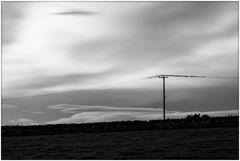 birds on a power line