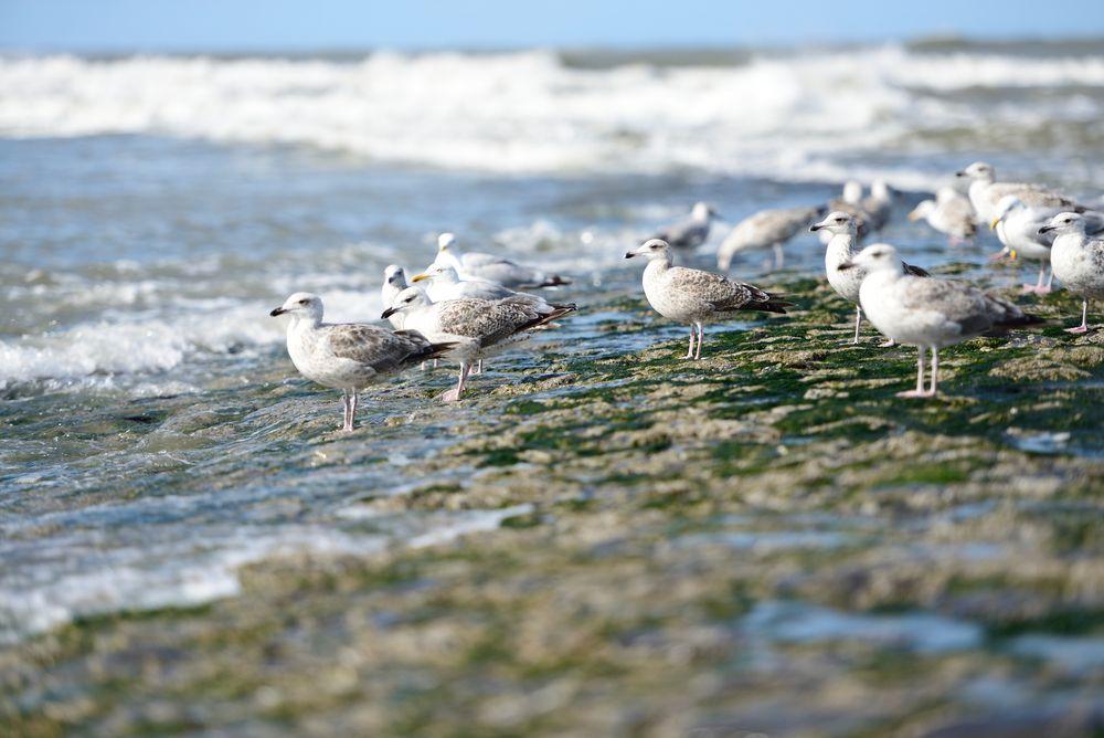 birds on Wangerooge