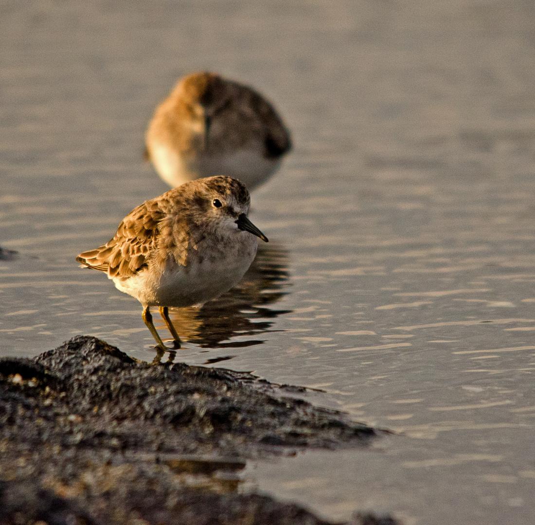 Birds on Waters Edge