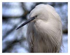 birdy 1
