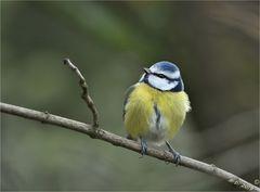 Birdy ...