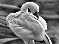 birdy 3