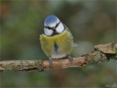 Birdy sah so niedlich aus ...
