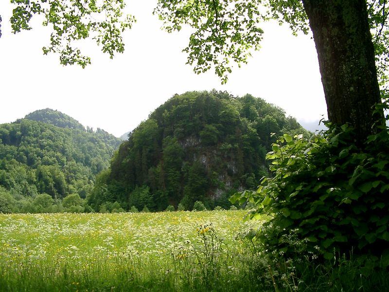 Birg - Kochel