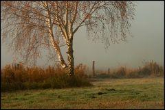 Birke an einer Nebelsoße