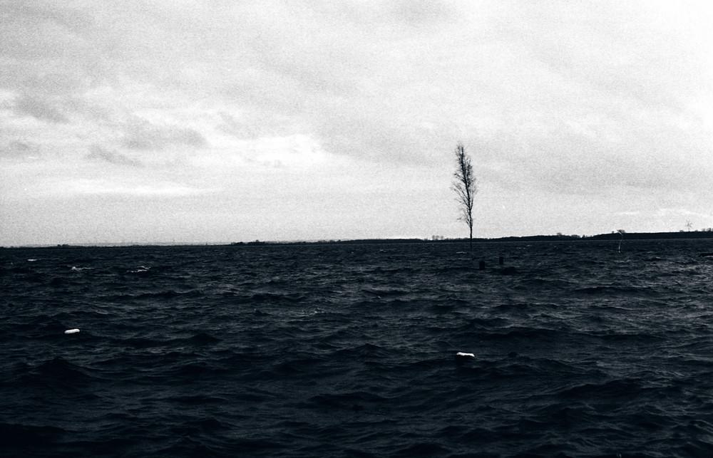 Birke im Wasser