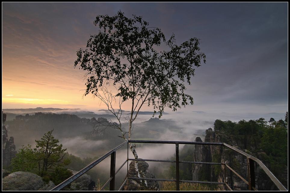 Birke ohne Höhenangst