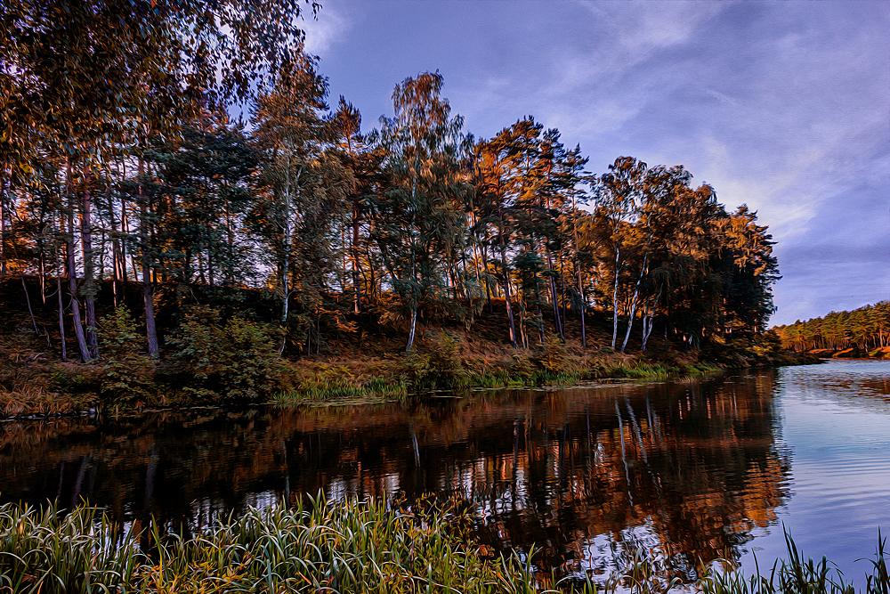 Birken am Fluss
