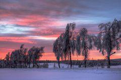 Birkenallee im Winter