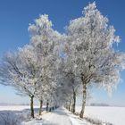 Birkenallee im Winter...