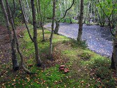 Birkenhain im Wunderland