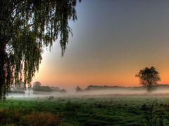 Birkholz bei Herbstmorgen