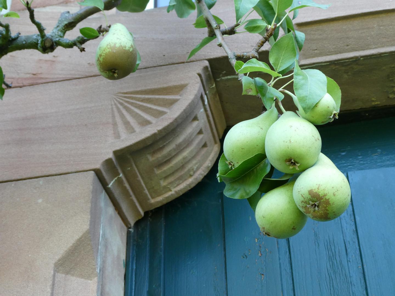 Birnen im Hermannsgarten fotografiert von Rosemarie