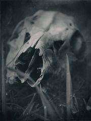 bis auf die Knochen