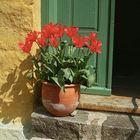 Bis die Tulpen wieder blühen,