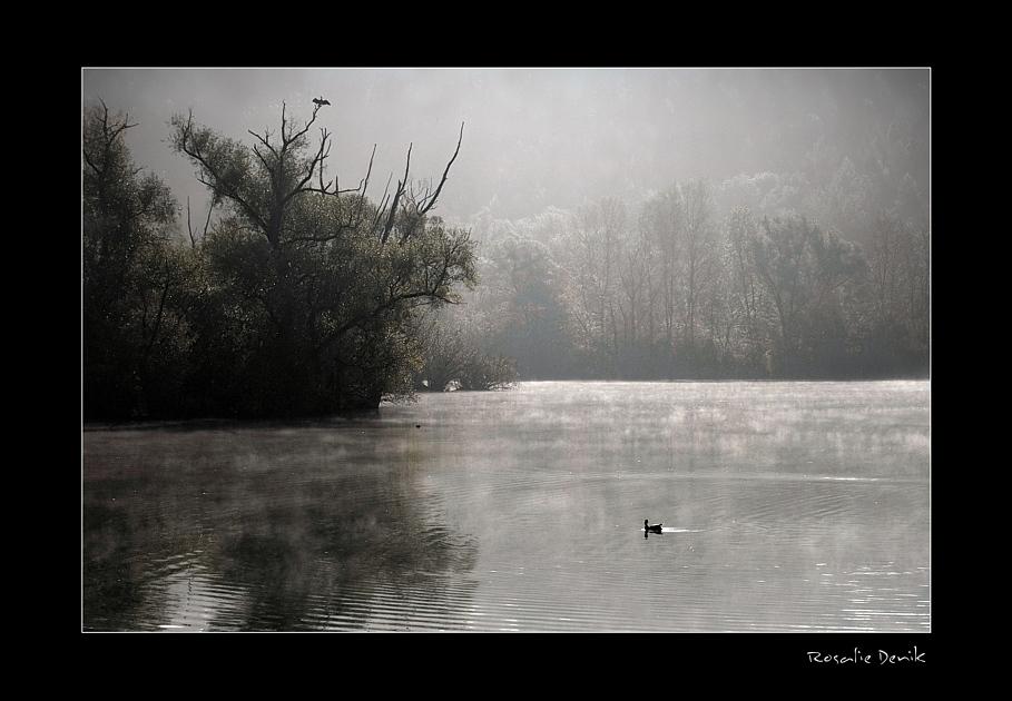 Bis ein Nebel fällt