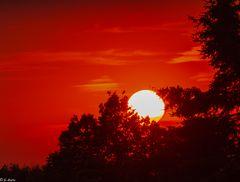 Bis Morgen Liebe Sonne (1)
