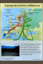 Bisherige Zugwege der Kraniche in Mitteleuropa