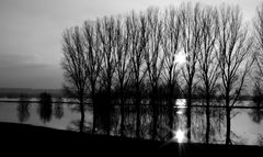 Bislich Rheinaue