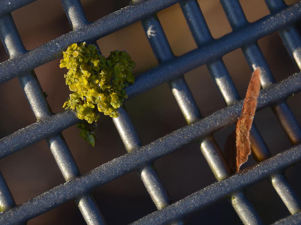 Bis(s)chen grün im Winter