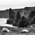 Bite of The Coast   --   Duncansby ©D5157_B.p05_3#1