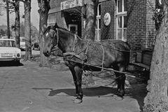Bitte warten.....Pferd in den 70 er Jahren...