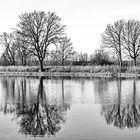 Bizarre Baumspiegelung