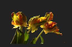 Bizarre Blumen