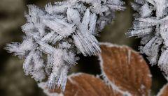 Bizarre Eiskristalle im Wald!